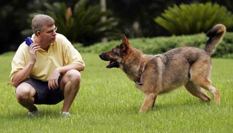 Psi jak je známe, nevznikli pouhým ochočením jejich předchůdců vlků. Nejdříve musela přijít mutace genů, která šelmám dovolila strávit i jinou potravu, než maso.