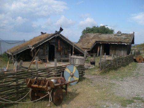 Někteří Vikingové sice opravdu trávili na mořích avboji skoro celý život, ale drtivá většina žila běžný usedlý život obyčejných zemědělců. Chovali prasata, kozy adobytek, žili na malých farmách aběhem roku byste je nerozeznali od jakéhokoliv jiného tehdejšího Evropana. Hlavní složkou stravy Vikingů bylo obilí, pěstovali především žito aječmen. Oves pak používali především jako píci pro domácí zvířata.