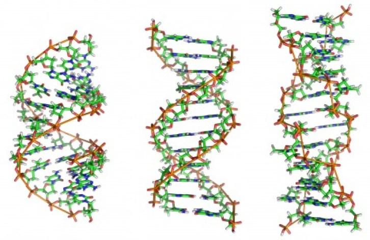 Obr. 04 DNA
