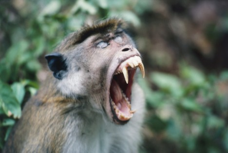 Obyčejné kousnutí opicí znamená pro Alexandra I. i celý řecký národ obrovskou pohromu.