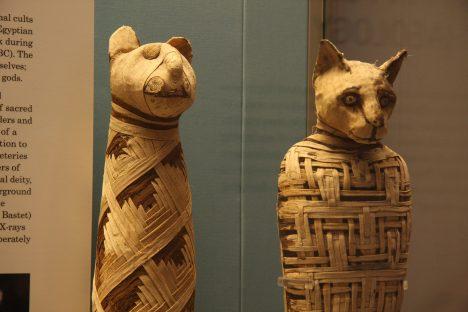 Ve starém Egyptě vznikaly tisíce mumií posvátných koček. Tyhle dnes najdeme v Britském muzeu.