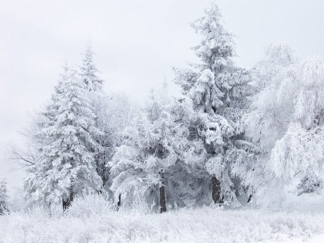Zima_1