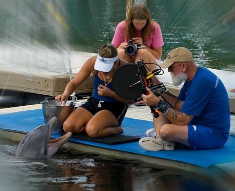 """Vědci nahrávali zvuky delfínů u pobřeží Skotska. Výzkum ukázal, že každý delfín """"podepisuje"""" svoji komunikaci speciální zvukovou sekvencí."""