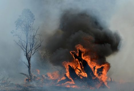 burning a tree stump