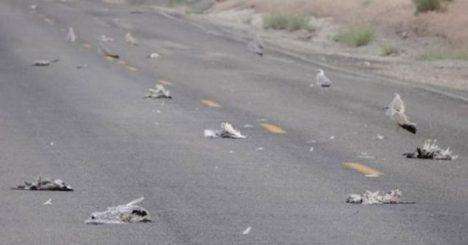 mrtví ptáci