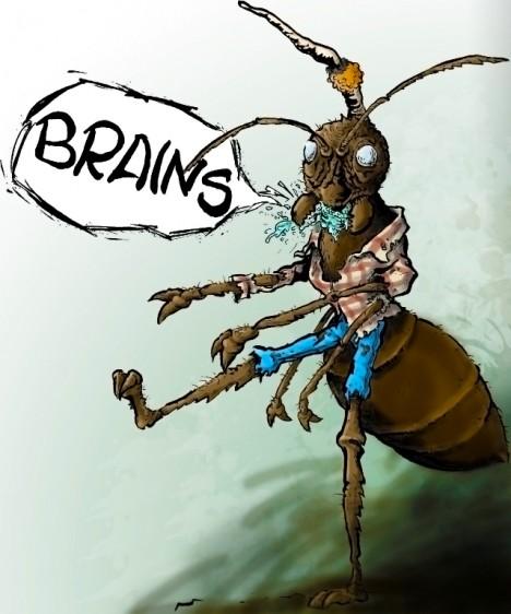 parazit na mravenci