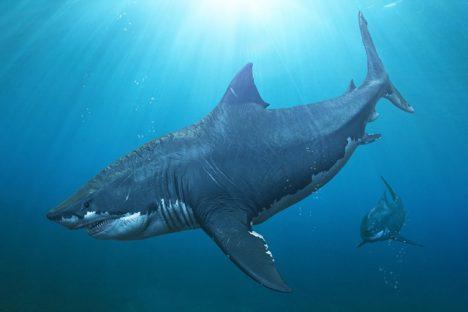 Nejstarší žraločí čelisti jsou staré 420 milionů let.