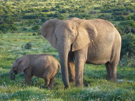 sloni.2