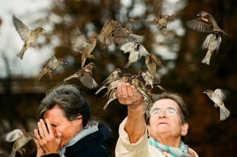 vrabci