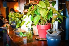 nolo plants
