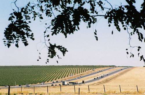 fields and traffic along Interstate 5, between Westley and Tracy, September 4, 2006