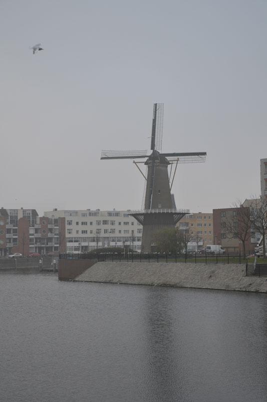 rotterdam-mulino