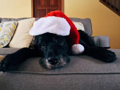 Natale e i possibili pericoli per i nostri animali