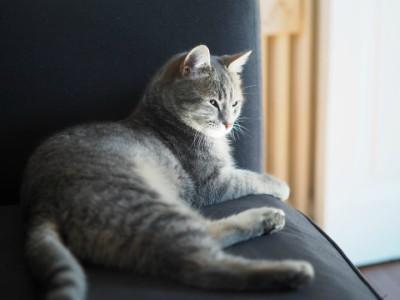 """Come aiutare un gatto a superare un """"abbandono"""" affettivo"""