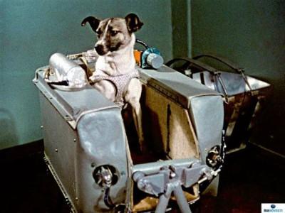 Sessant'anni fa Laika fu lanciata nello spazio