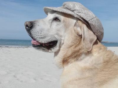 Vacanze col proprio cane o gatto: come organizzare il viaggio