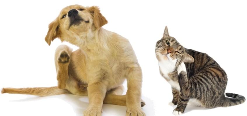 Otite negli animali domestici: sintomi e rimedi
