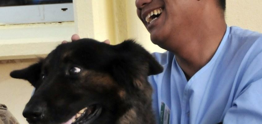 Pet-therapy: programmi terapeutici con gli animali