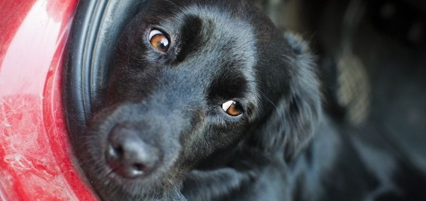Viaggiare in auto con i nostri animali: consigli per ridurre il loro stress