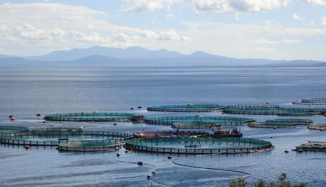 Επενδυτικά σχέδια υδατοκαλλιεργειών,  μεταποίησης αλιευτικών προϊόντων