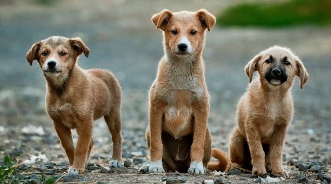 Δήμος Κατερίνης - Συνεργασία  με φορείς και πολίτες για τον περιορισμό των αδέσποτων ζώων