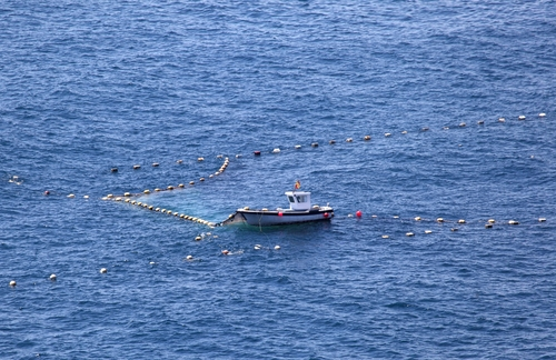 Small-scale fisheries in the Common Fisheries Policy