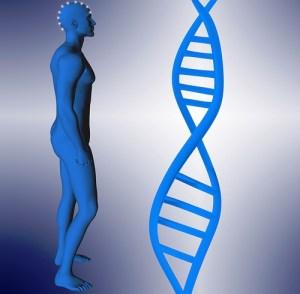 DNA and human morphology