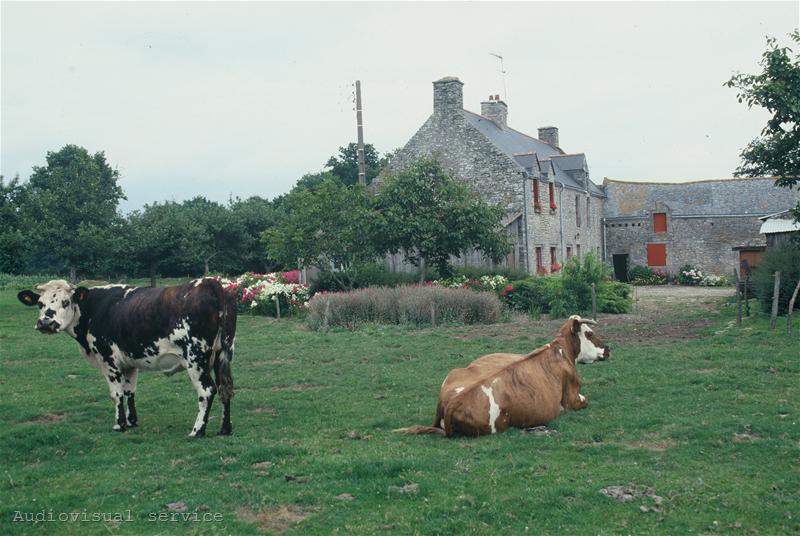 Future of small farms