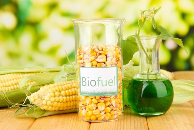 Food versus fuel