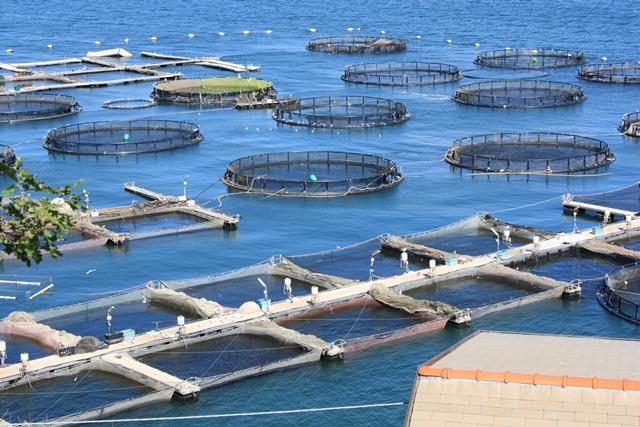 Aquaculture in the EU