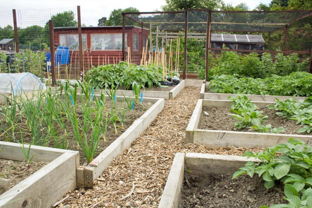 Urban and Peri-urban Agriculture