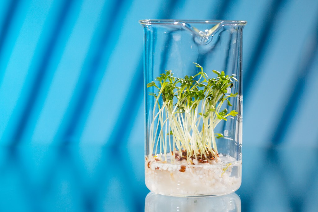 Patents and plant breeders' rights