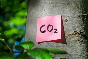 CO2 post-it on a tree