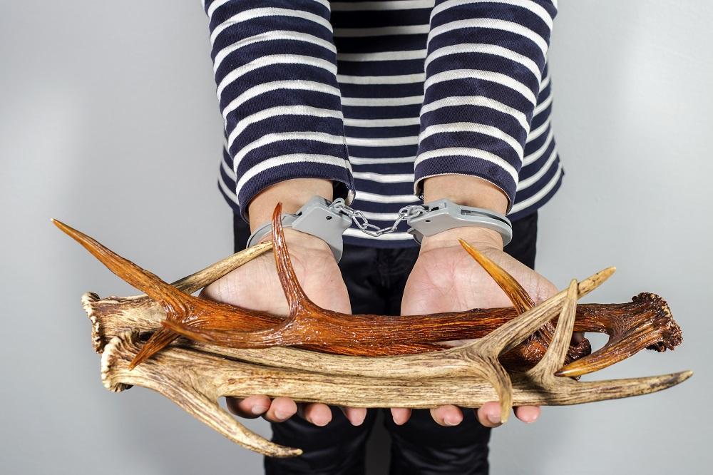 EU actions to combat wildlife crime
