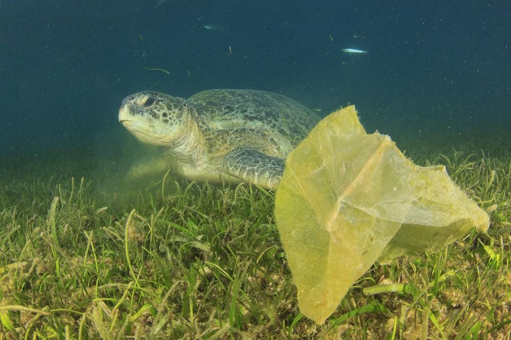 Plastic bags: EU's response to reducing consumption