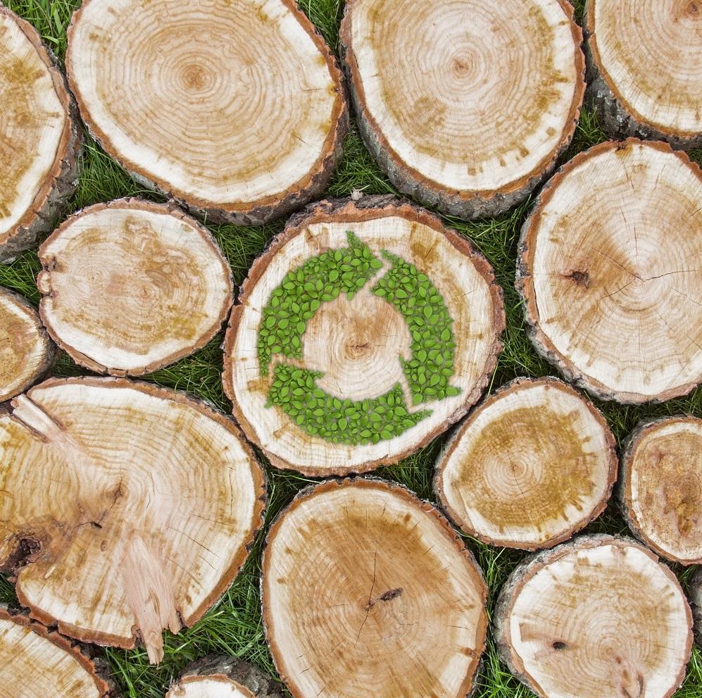 EU sustainability criteria for bioenergy [Policy Podcast]