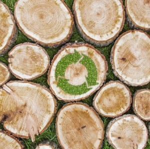 Tree stumps on the grass with recycle symbol