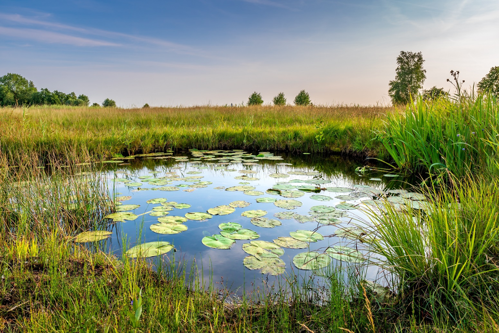 Biodiversity protection: Where do we stand?