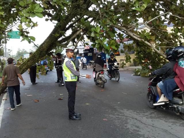 EVAKUASI. Petugas tengah mengevakuasi pohon Ketapang yang tumbang di Jalan Danau Sentarum, Pontianak Kota, Rabu (25/4)—Polisi for RK