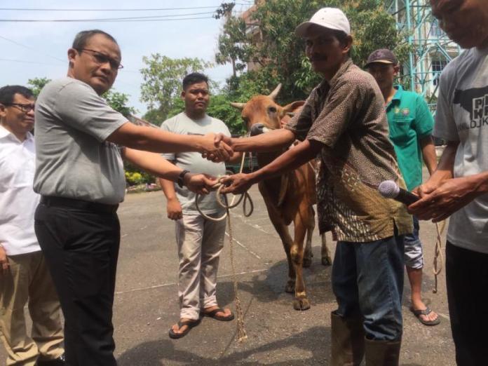 KURBAN. Slamet Sutantyo menerima dua ekor sapi dari pedagang di halaman Kanwil DJP Kalbar untuk diserahkan kepada yang membutuhkan, Kamis (23/8). Nova Sari-RK
