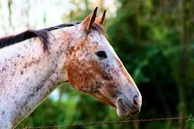 horses-head-2