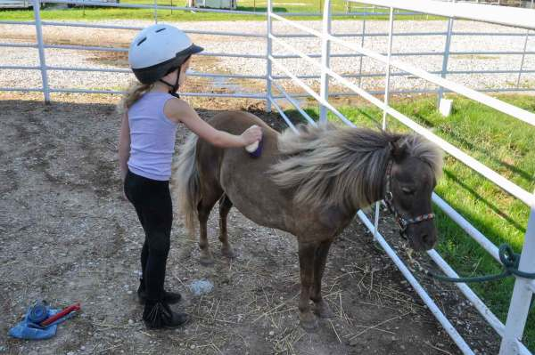 Mommy and Me Camp, Young Girl Brushing a Miniature Horse