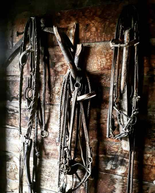 The equipment to live a life as a Gaucha - Bridles and Lassos
