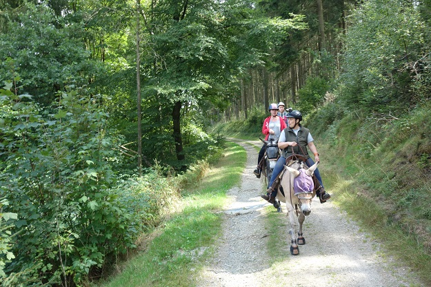 A group of women riding mules on a dirt road through a forest in Belgium