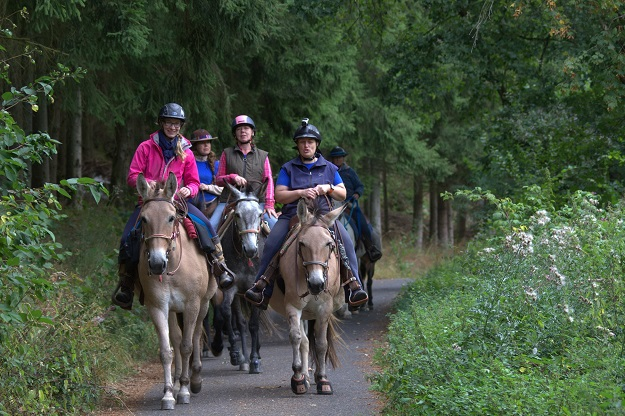 A group of people riding mules on a forest track in Germany
