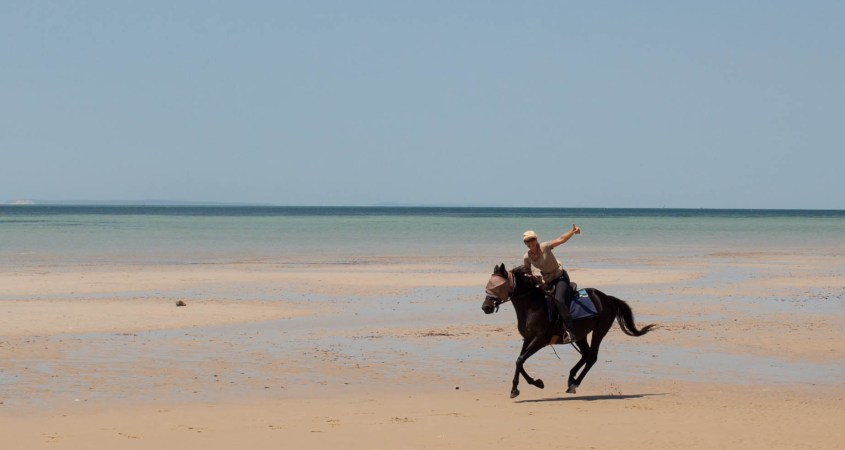 The well trained safari horses enjoy the gallop on the beach in Mozambique as much as the rider.