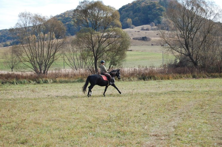 Krystal is riding a black horse on a grass field in Romania