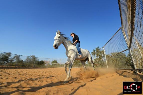 Natural Horsemanship in India: Woman riding Marwari horse in roundpin without saddle and bridle