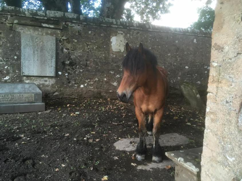 Staying on graveyard during a journey from Scotland to Cornwall on horseback