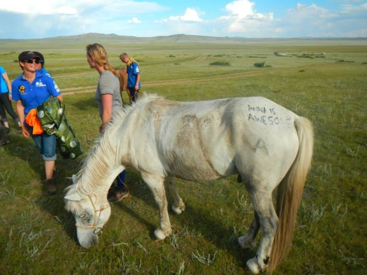 One of Katja's favorite stallions during the mongol derby